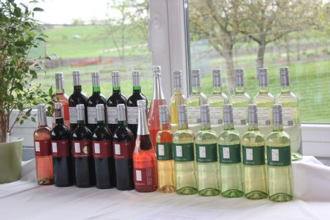 Unser-Wein-hat-ein-neues-Zuhause-007